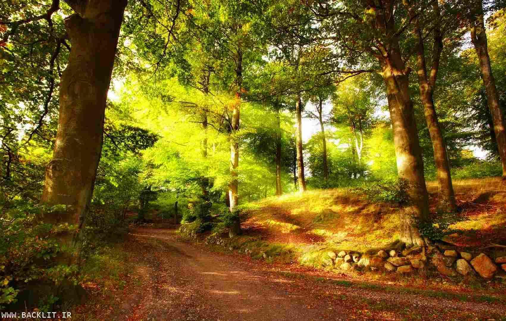 جنگل 2