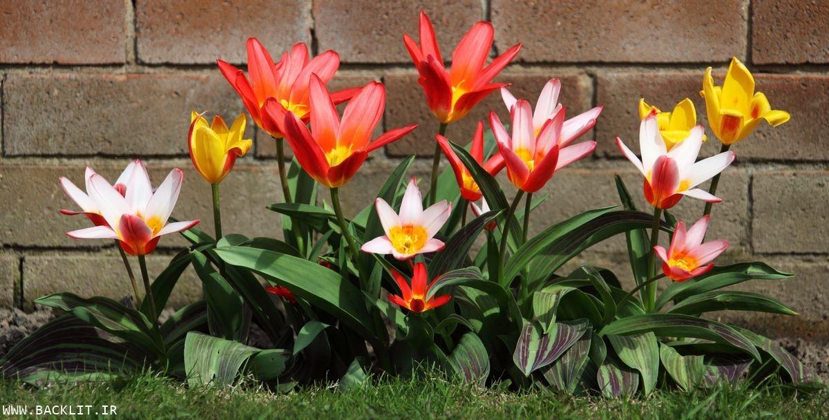 قاب شکوفه های بهاری 66