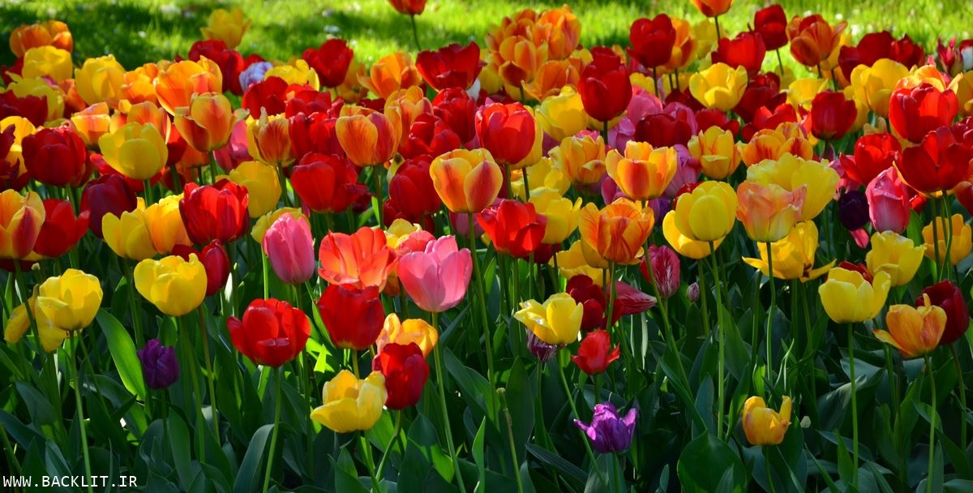 قاب شکوفه های بهاری 68