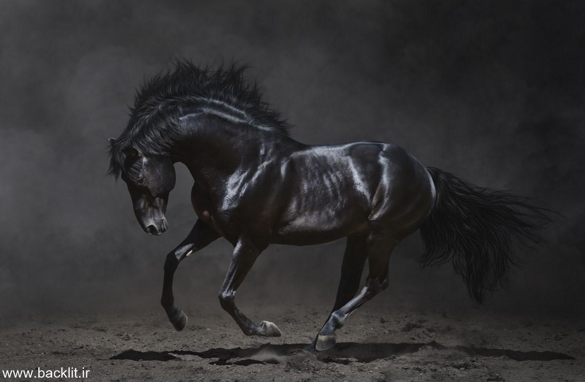 قاب عکس اسب