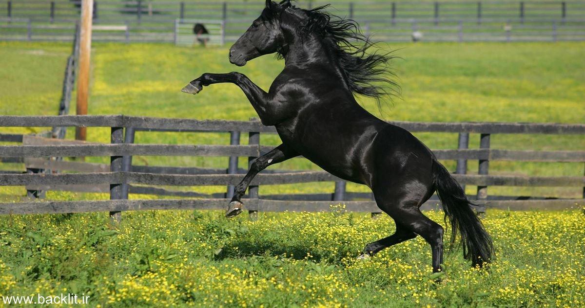 تابلو اسب
