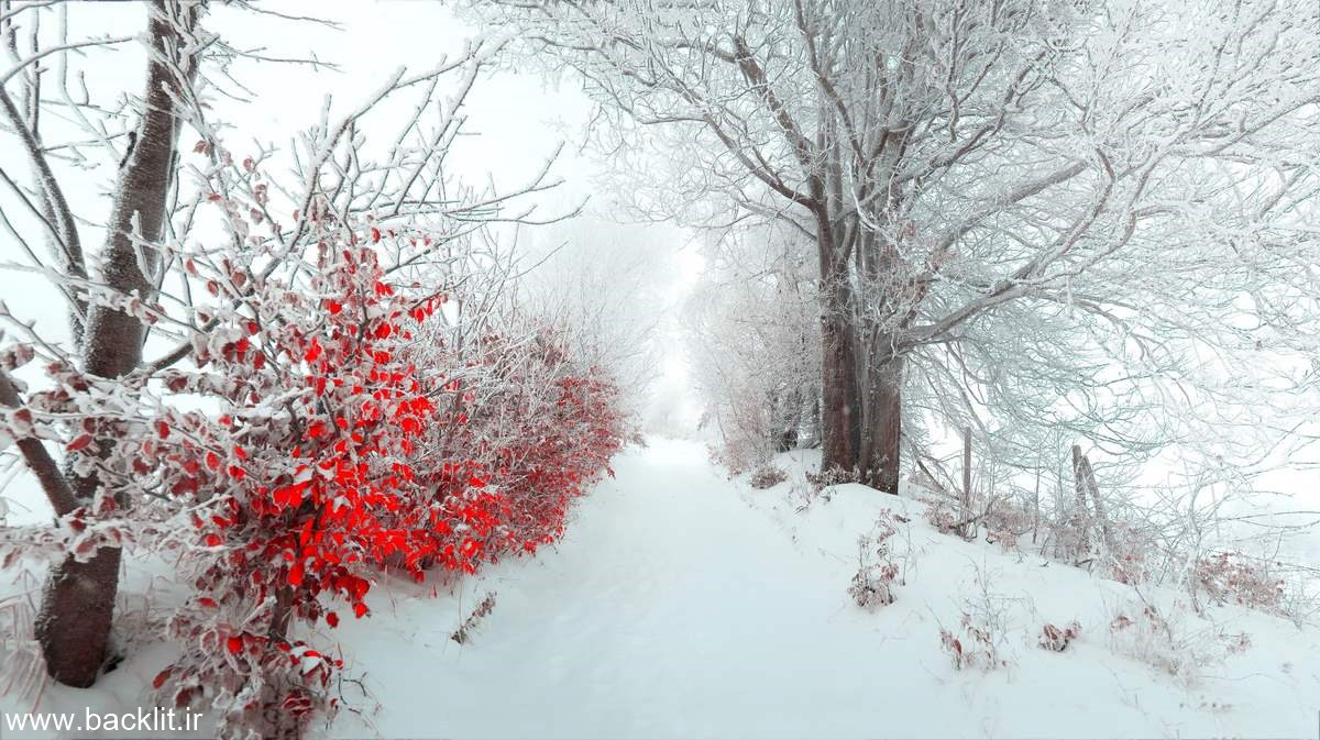قاب عکس  زمستان
