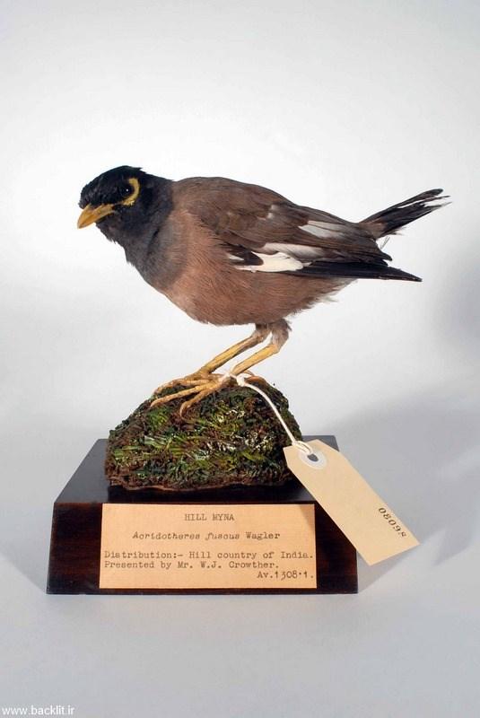 قاب عکس پرندگان