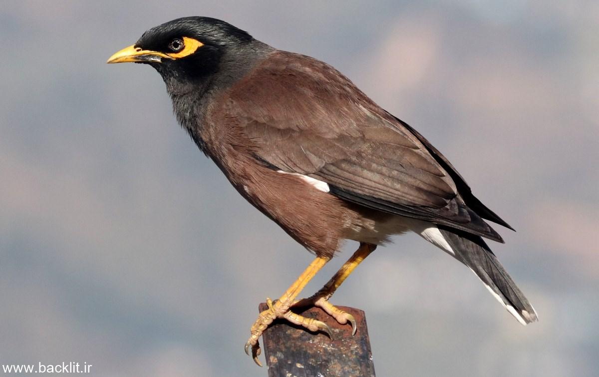 لایت باکس پرنده